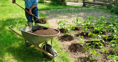 Gardening for Seniors: Tips and Benefits | Orange County Home Care