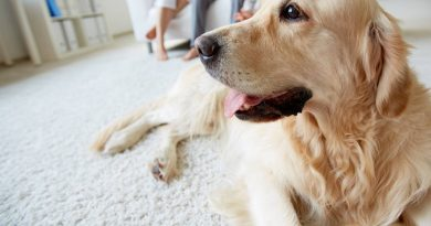 How to Determine if a Service Dog or Other Pet Is Right for a Senior